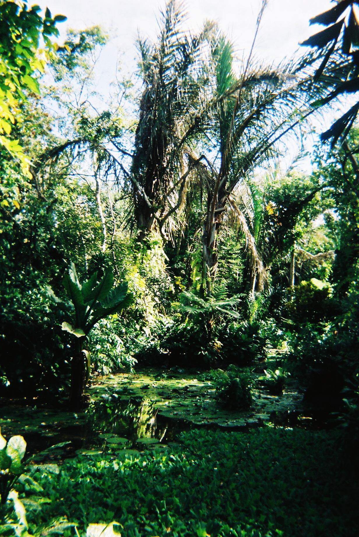 Ile Maurice, Jardin aux pamplemousses