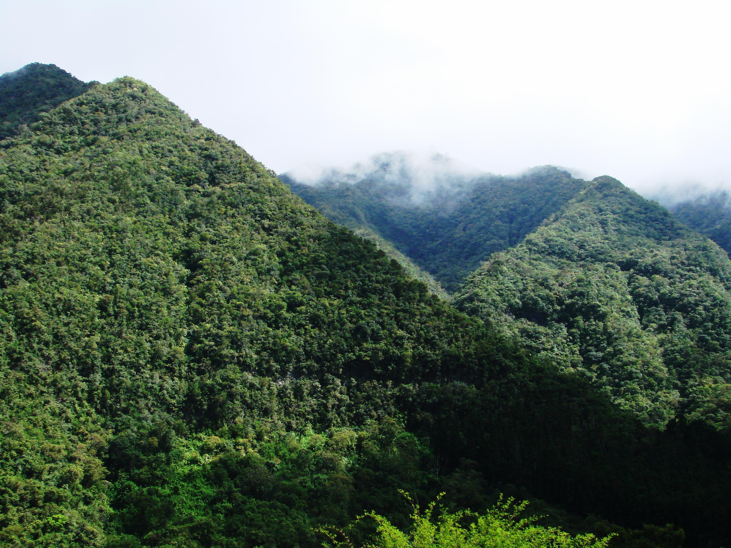 Ile Réunion, montagne Les Makes
